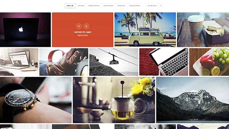 essential wordpress themes you need
