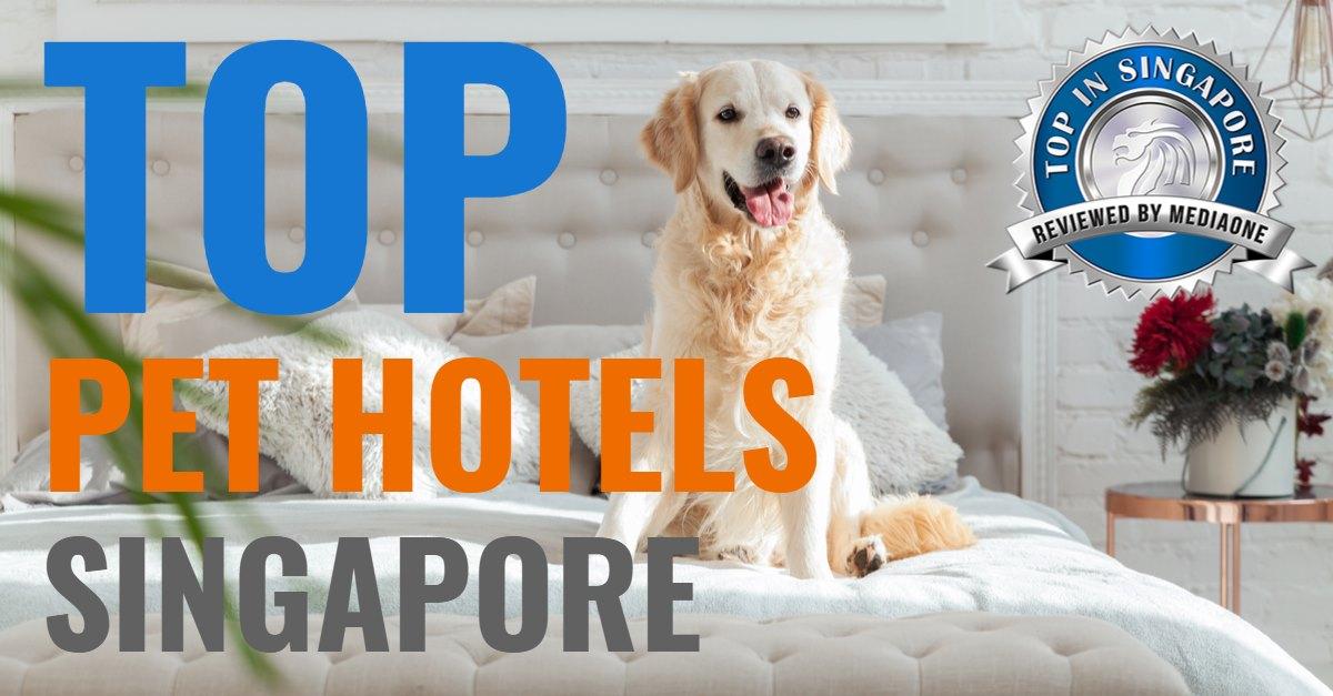 top pet hotels singapore