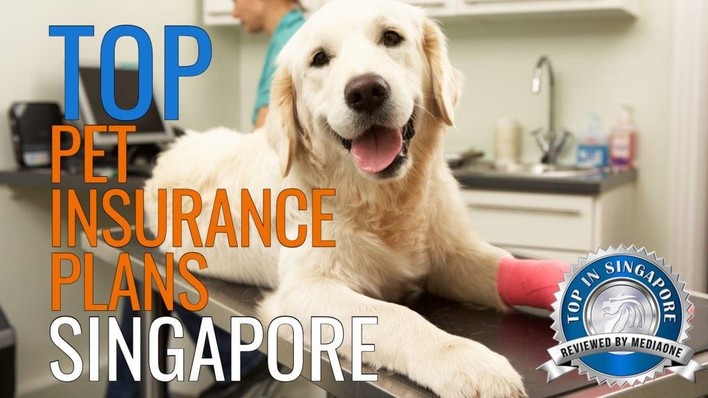 Top Pet Insurance Plans in Singapore